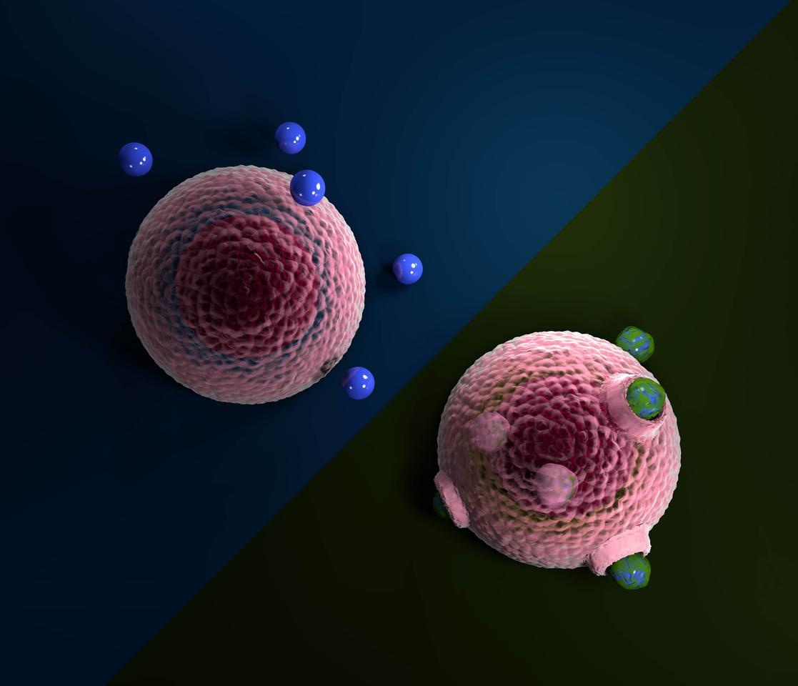 A new study has shown how microplastics in water can develop coatings of biomolecules, which make them much more likely to be internalized by living cells