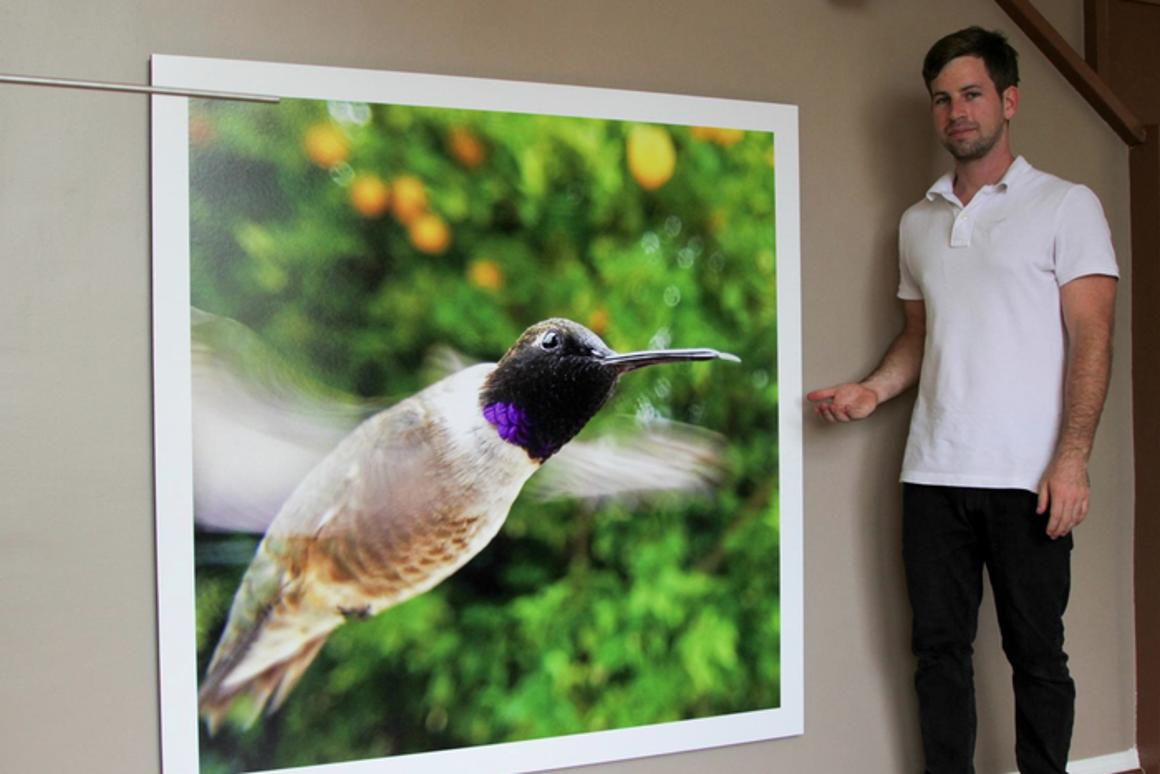 Bryson Lovett has created Bird Photo Booth, which uses remotely controlled smartphones to video and photograph birds