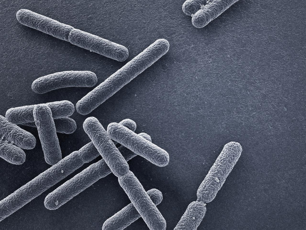 Researchers have uncovered a new mechanism for killing antibiotic-resistant gram-negative bacteria such as E. coli