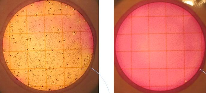 The bacteria content of pet feces after seven days left untreated (left) and being fermented in the Bokashi system (right)