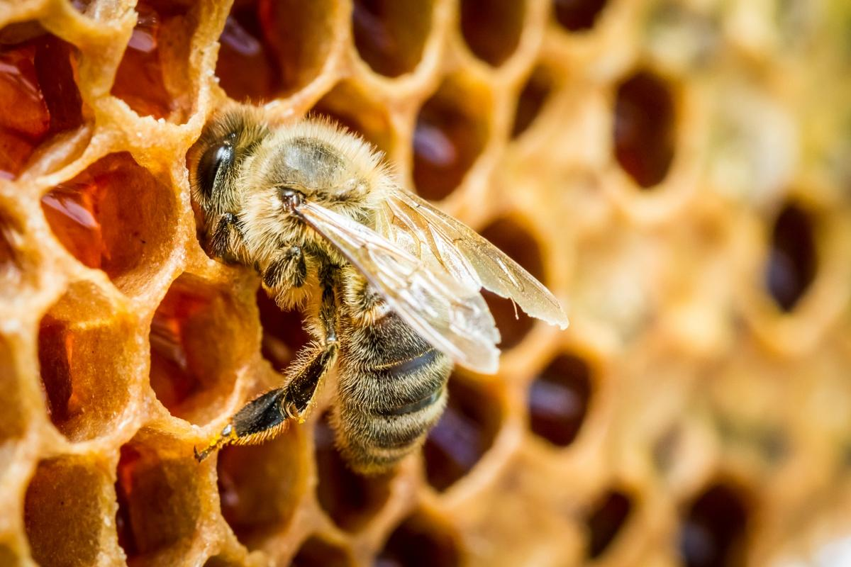 Researchers have identified genes associated with cleanliness behaviors in bees, which could ultimately help protect colonies from collapse