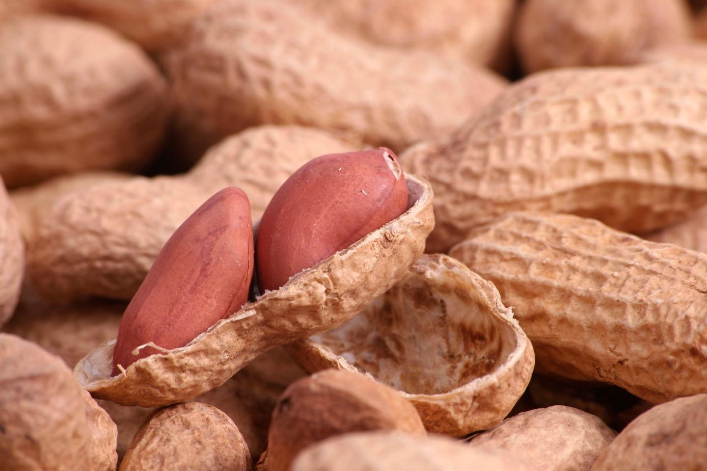A new nasal spray could help vaccinate against peanut allergies