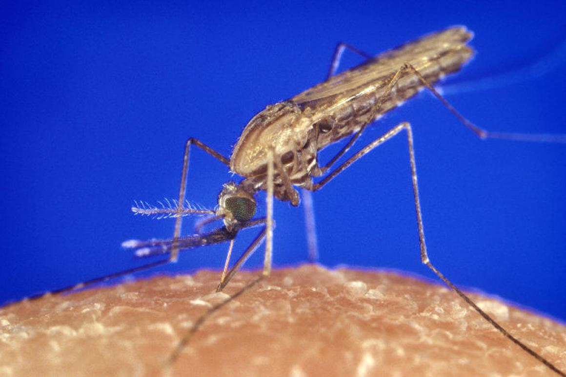Silica nanoparticles used to make mosquito-repellant clothing