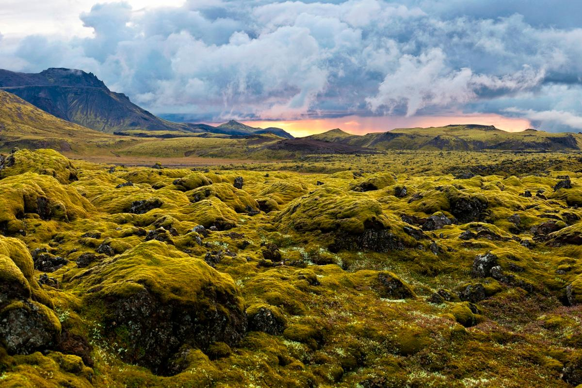 Researchers claim that the earliest plant life on land, which would have looked like moss, likely arose 500 million years ago – much earlier than previously believed