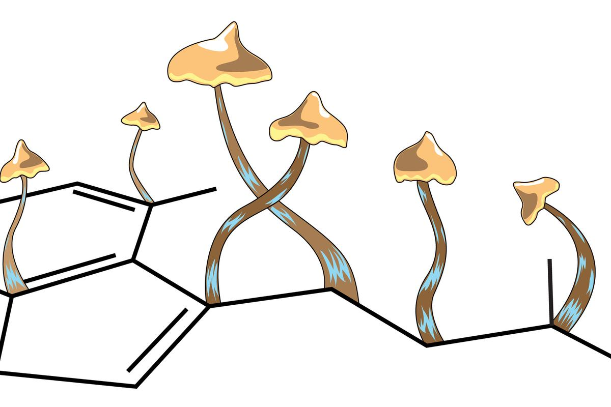 One dose of psilocybin induced rapid growth of dendritic spines in the frontal cortex of mice