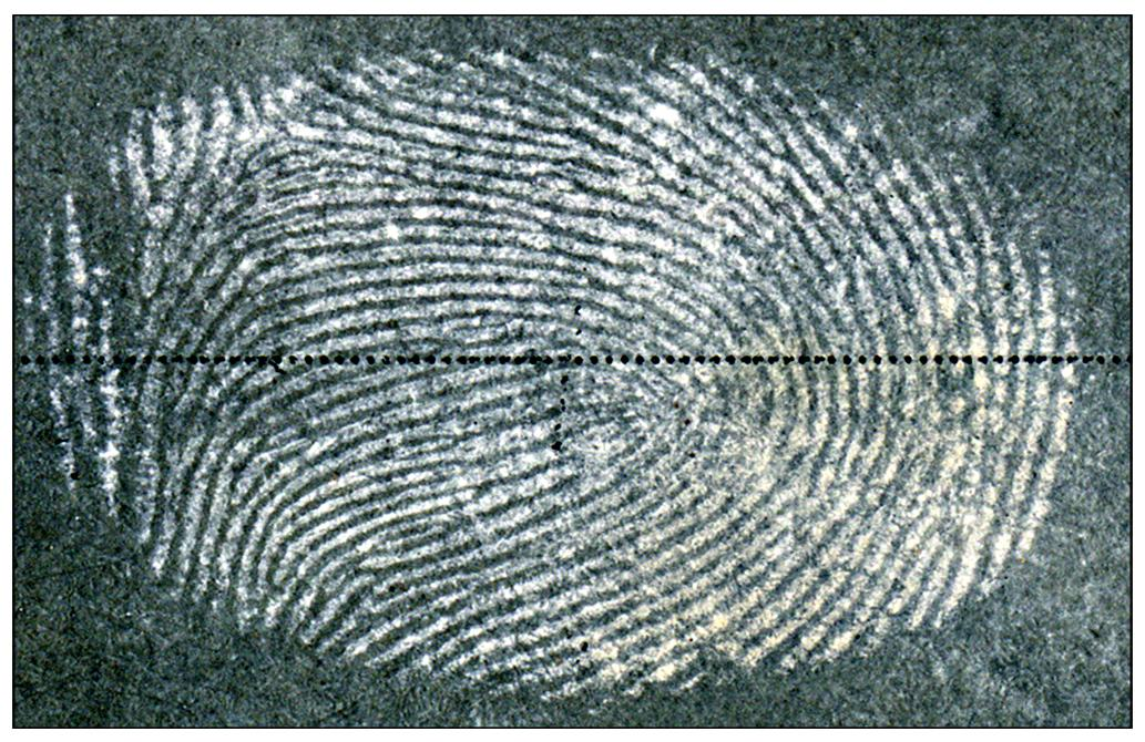 A fingerprint image obtained using the new method