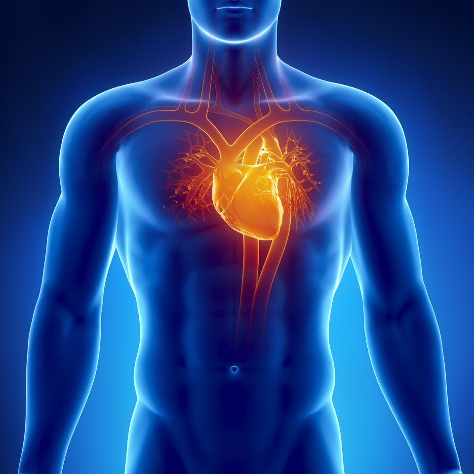 There may be new hope for heart attack victims, in the form of patches that incorporate gold nanofibers and cardiac cells (Image: Shutterstock)