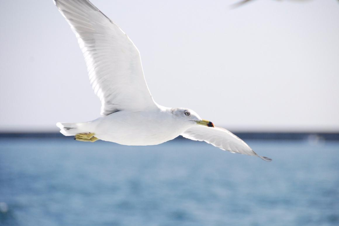 A team of scientists will put bird flight under the microscope in a new study