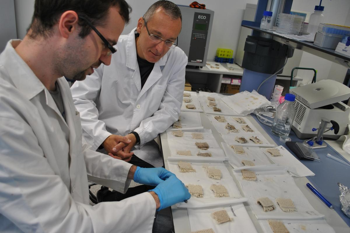 Researchers Carlos Diaz (left) and Tzanko Tzanov (right), working on the biodegradable carpet (Photo:UPC)