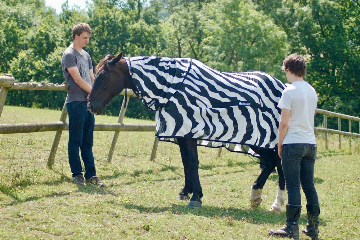 Researchers put a zebra-pattern coat on a domestic horse, as part of the study