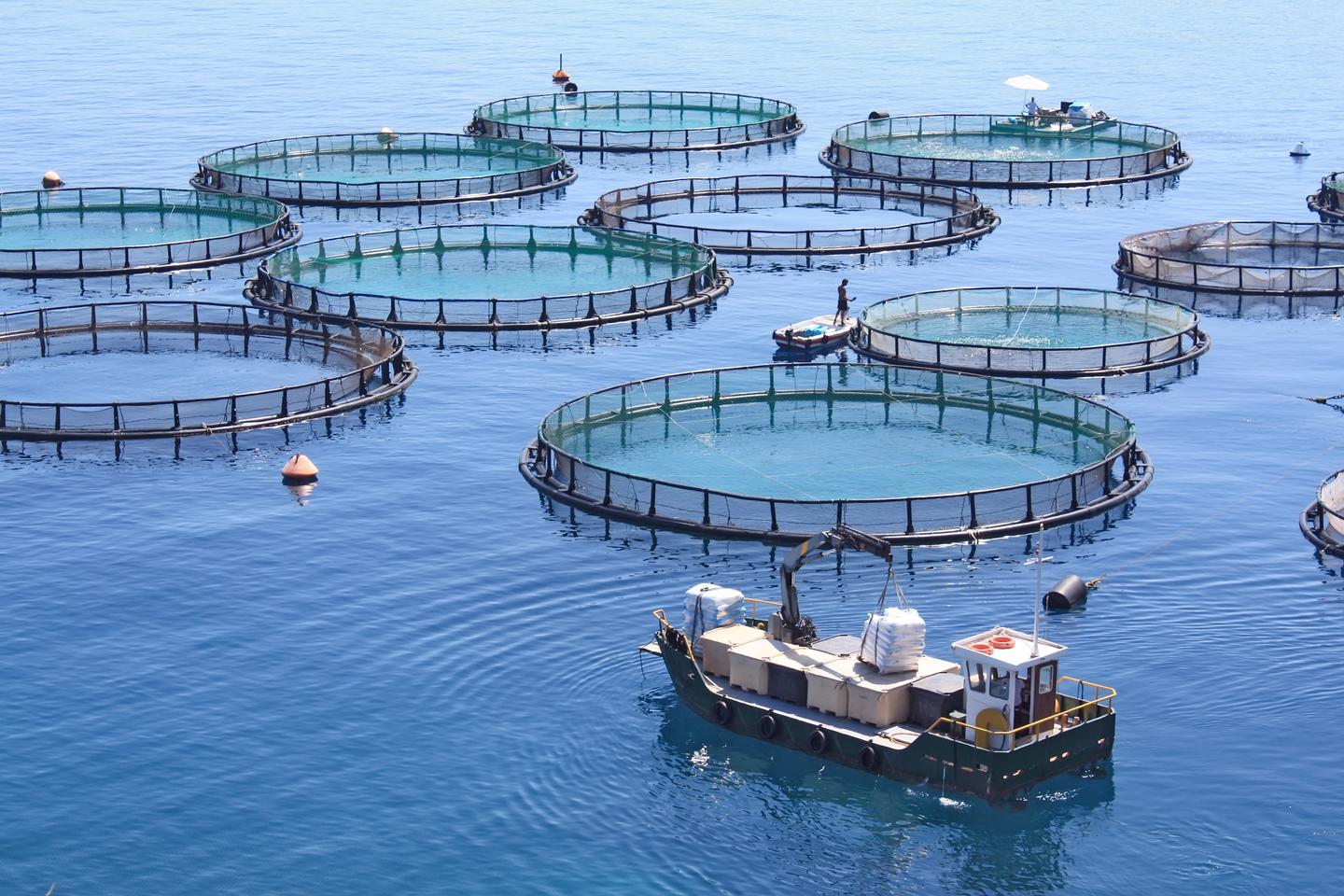 To estimate numbers of fish inside pens (pictured), representative samples currently have to be pulled out with a net