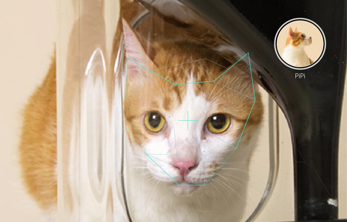 Bistro is claimed to be the first smart cat feeder with facial recognition technology