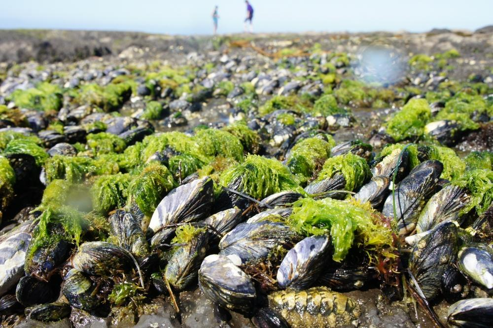 A new wet adhesive sticks to surfaces underwater by mimicking the proteins in mussel feet