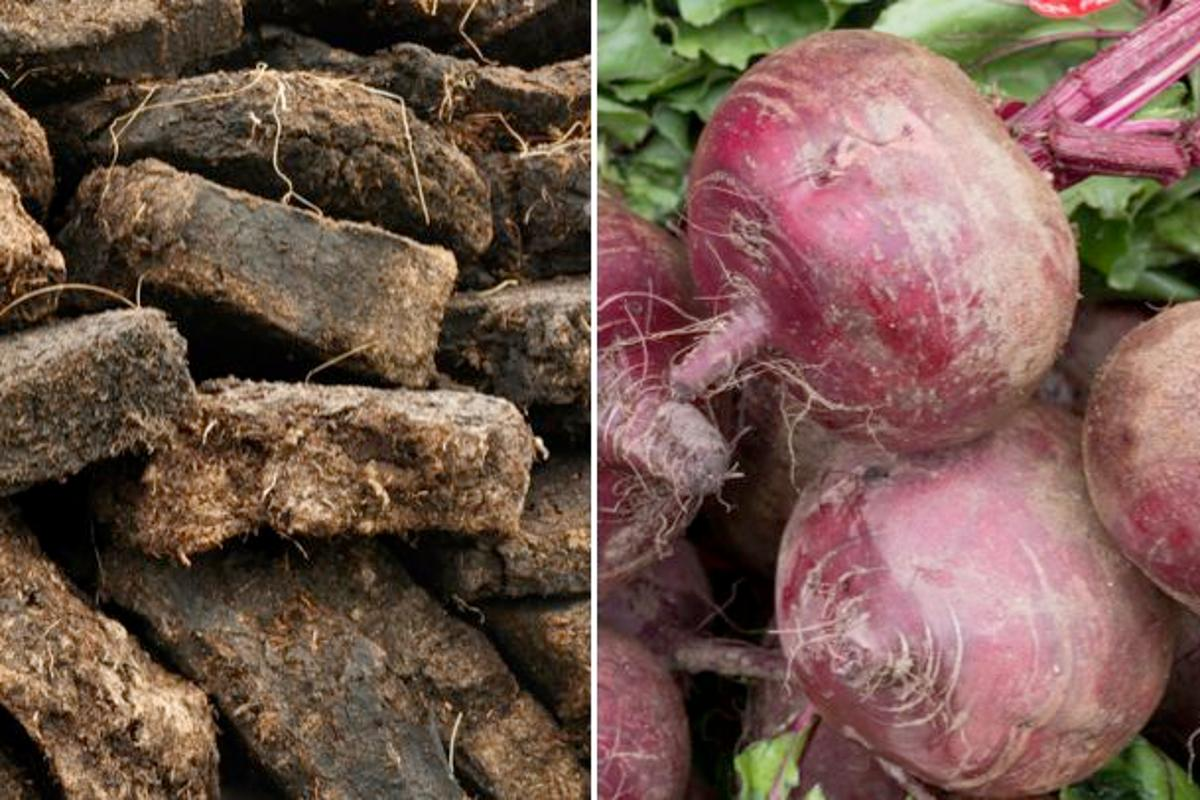 Scientists are developing eco-friendly composite materials containing peat fiber and beet pulp (Photos: Shutterstock/Shutterstock)