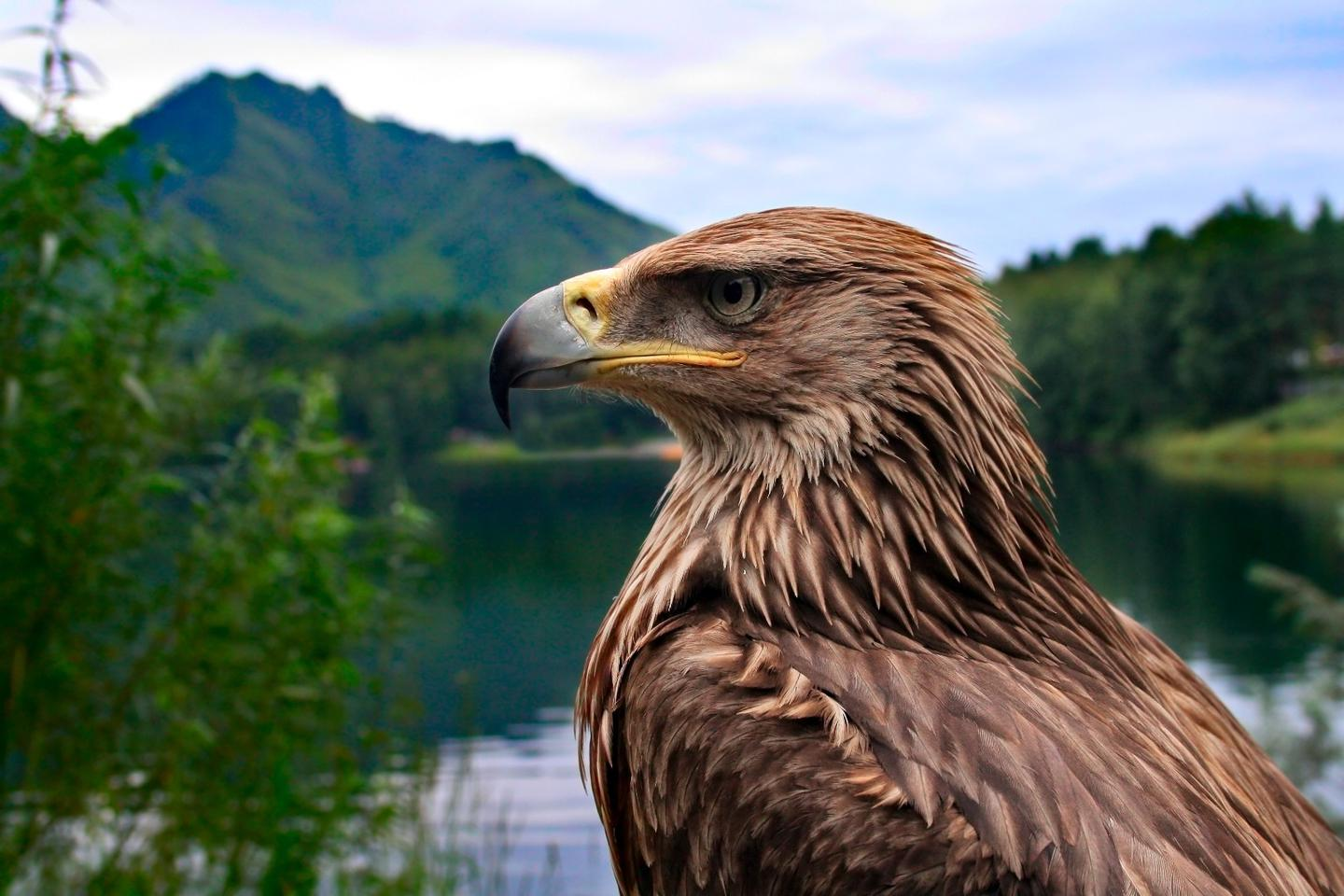 France has given golden eagles a license to kill (drones)