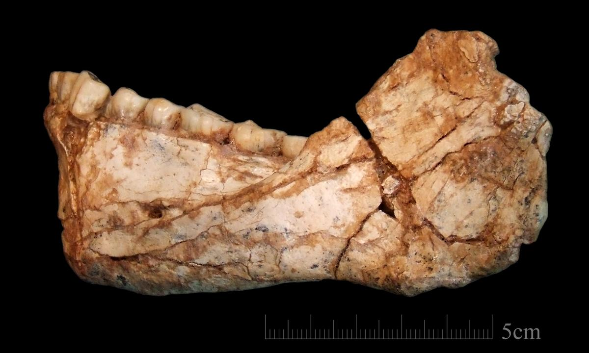 An almost complete adult mandible discovered at the site of Jebel Irhoud