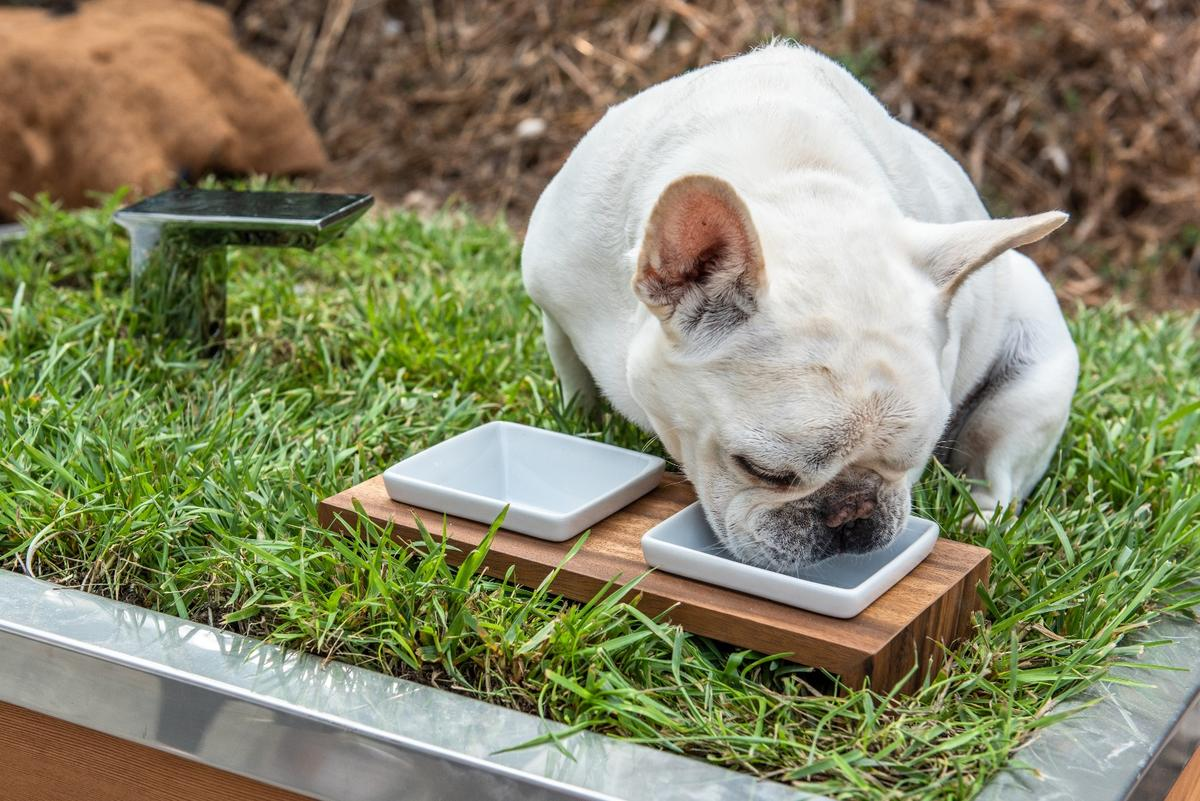 Doggy Dreamhouse is topped by a green roof