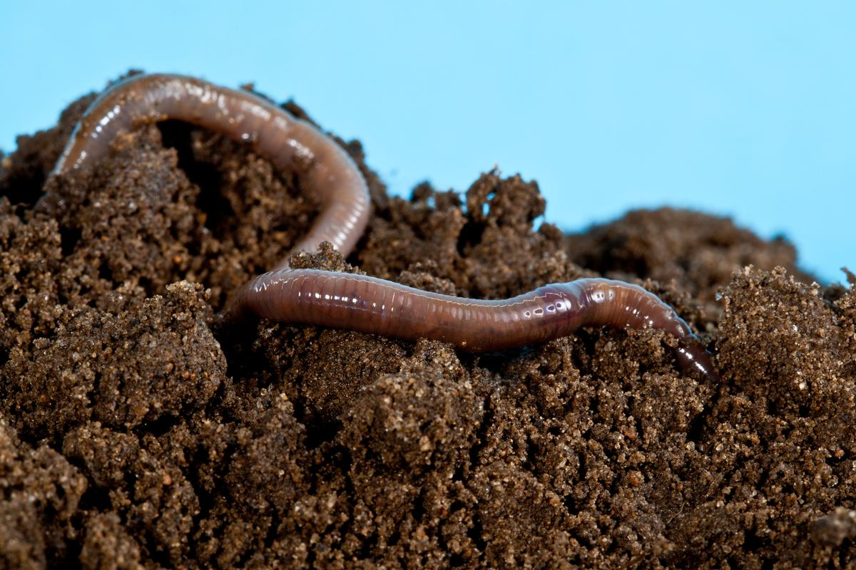 Earthworms and inchworms have served as inspiration for two new soft robots