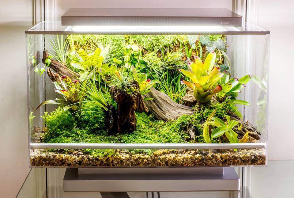 A prototype Biopod terrarium
