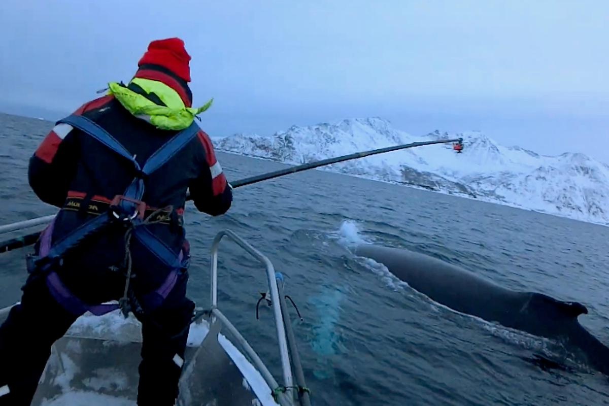 The camera was temporarily attached to a whale using a pole and a suction cup