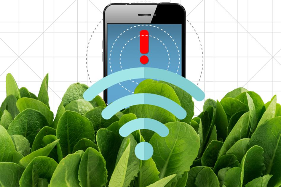 Nanobionic spinach can be used to detect explosives