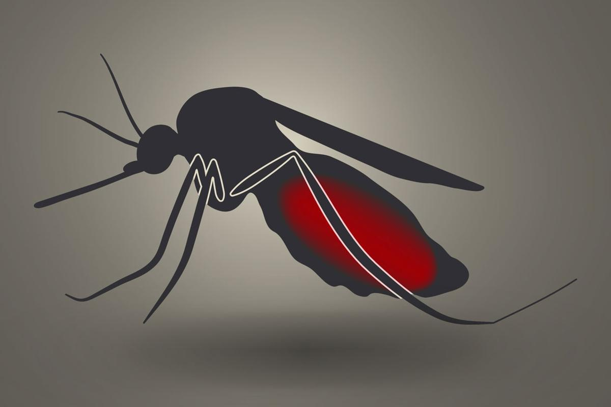 A new malaria vaccine introduces live parasites into the human bloodstream to kickstart the immune system's response