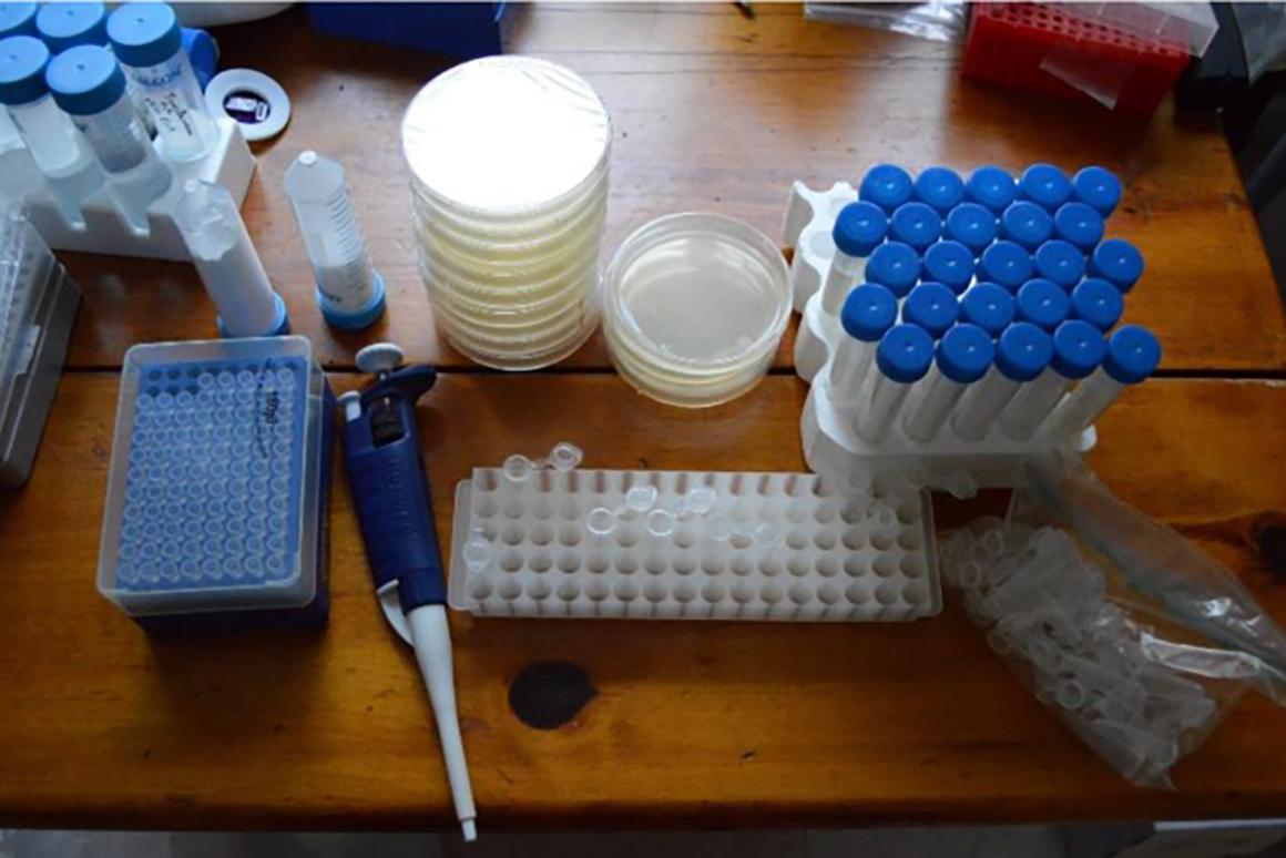 Do-it-yourself CRISPR genome editing kit for bacteria