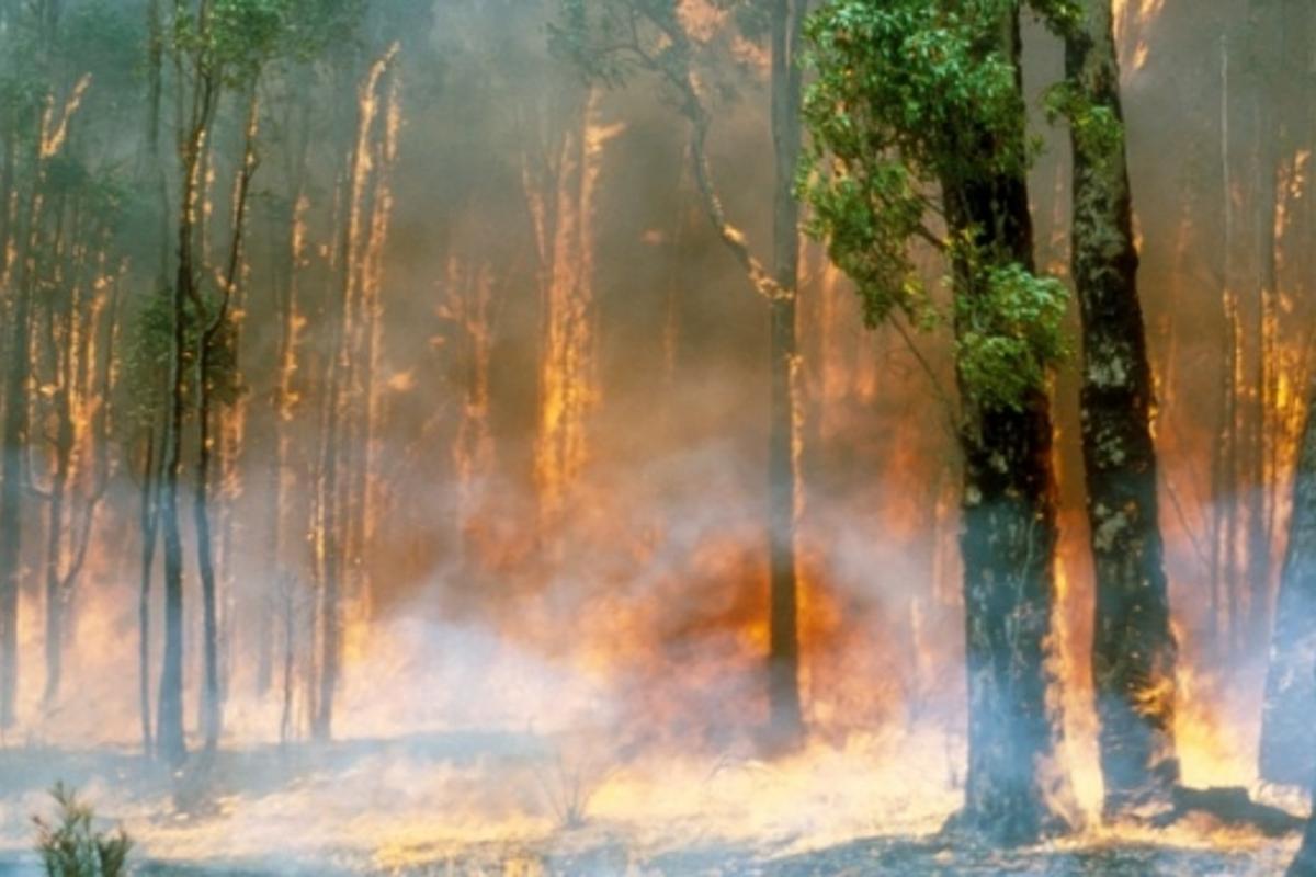 Image credit – Willem van Aken, CSIRO