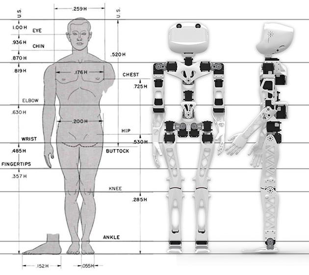 Blueprints show that Poppy's structure more closely matches up to a person than to robots of a similar size (Image: Inria / H. Raguet)