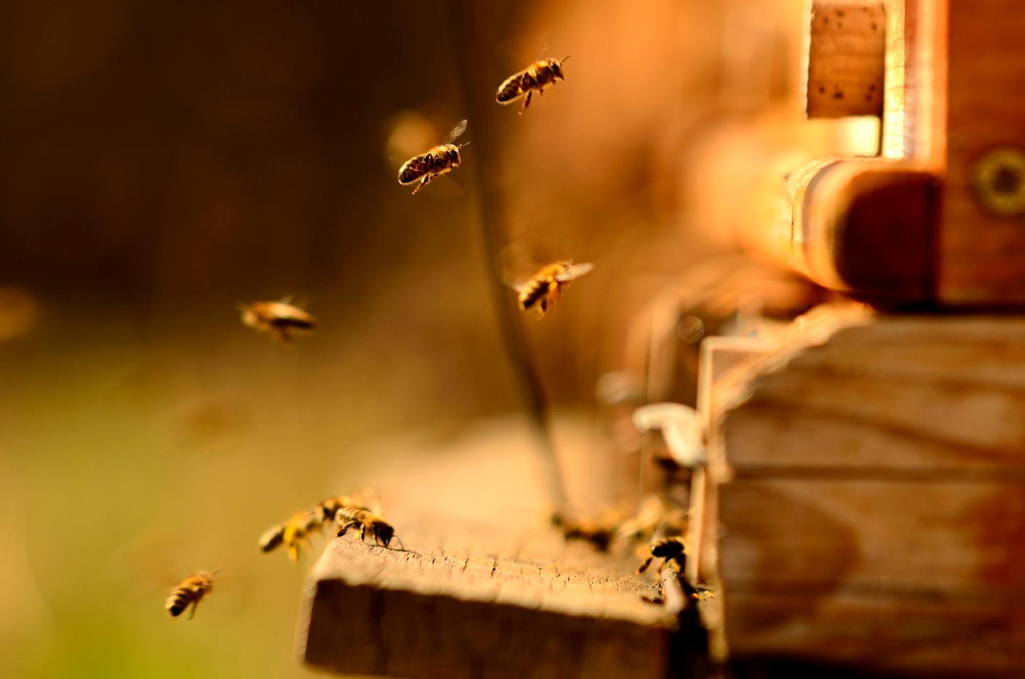 Scientists have found that a common insecticide can impact the sleep cycles of bees
