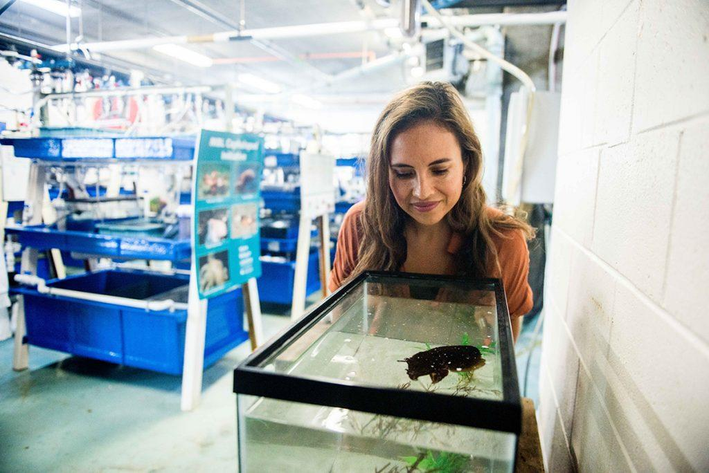 Dr. Alexandra Schnell observes a cuttlefish in the Marine Biological Laboratory's Marine Resources Center