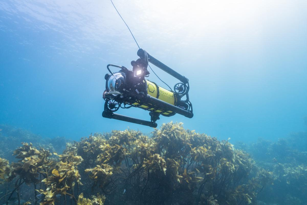 The Boxfish ROV boasts a1,000-meter max depth, which requires twin ultra-bright 10,000 lumen LED lighting