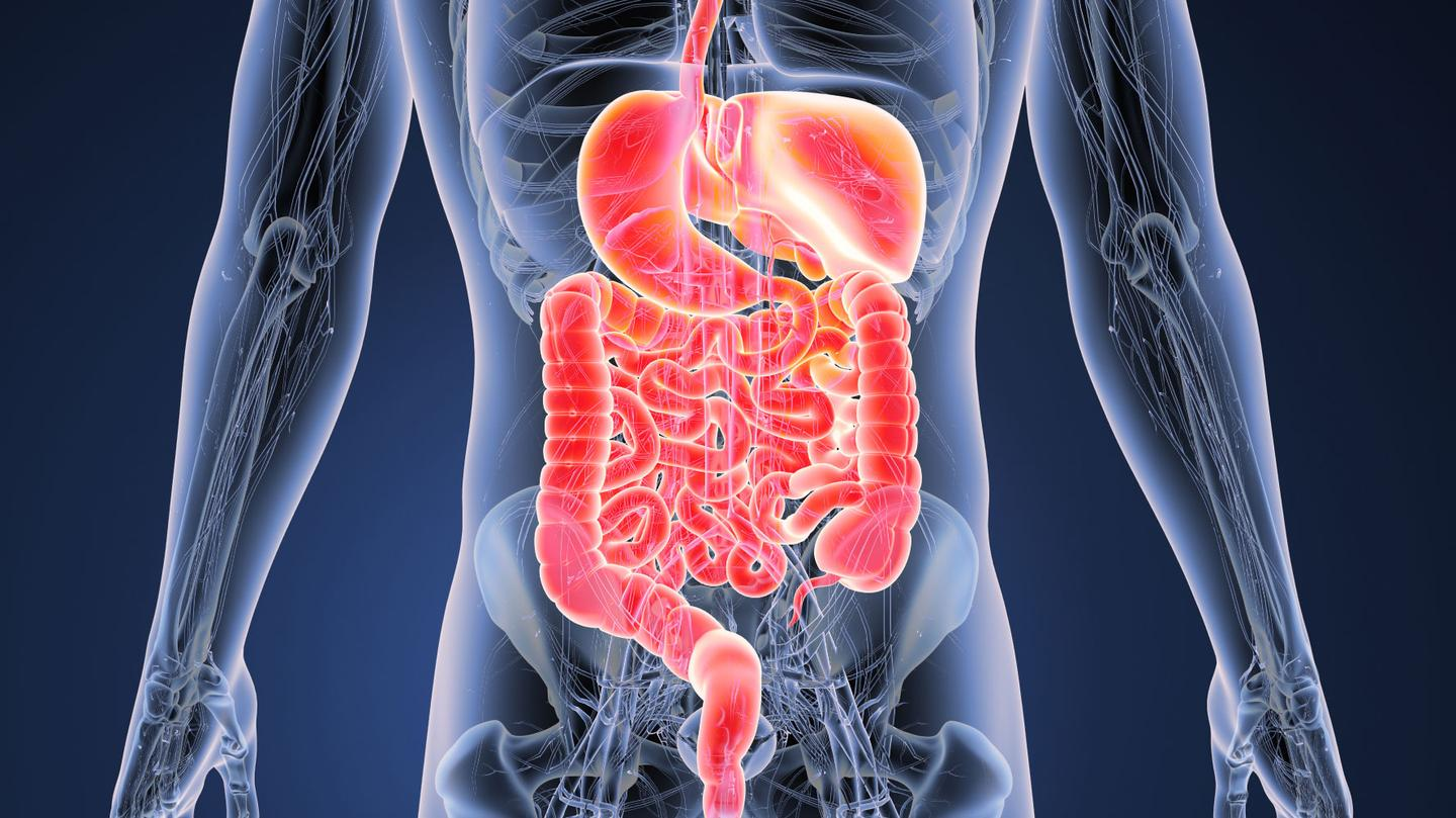 "A new, non-invasive test for bowel diseases looks for signs of ""leaky gut"" in blood and stool samples"