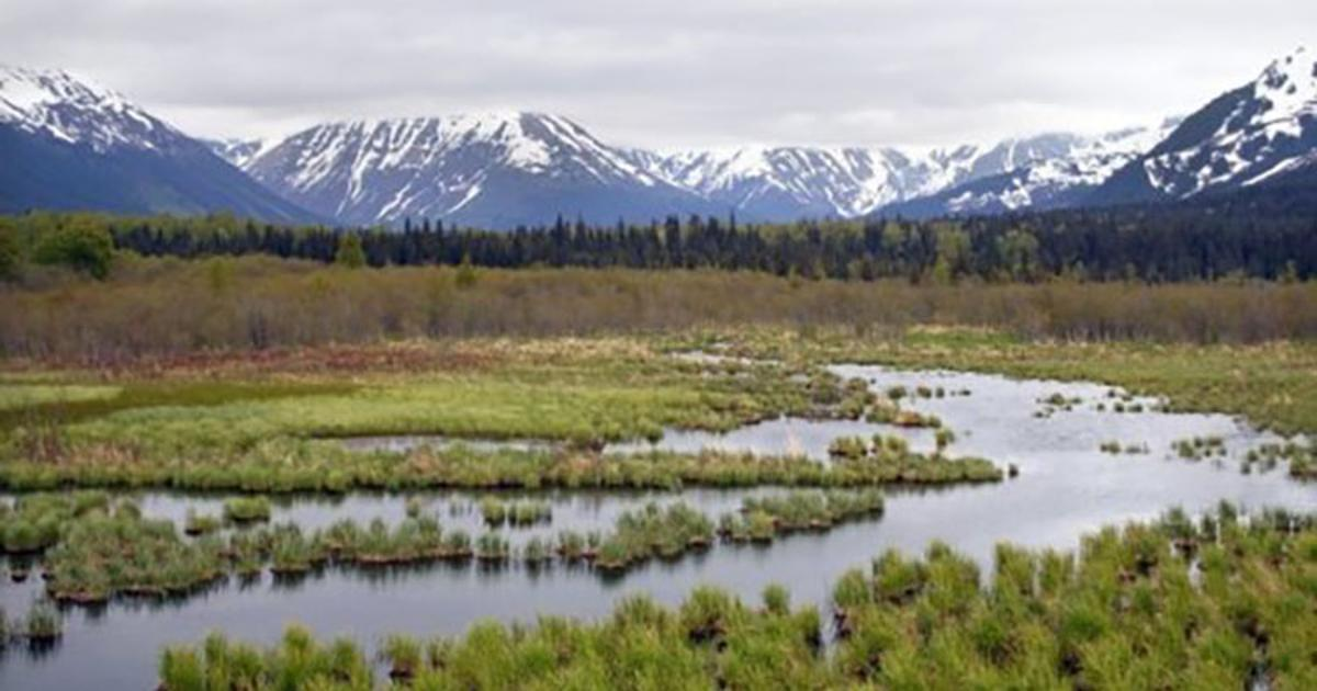 Soil microbes may counter methane release from thawing permafrost