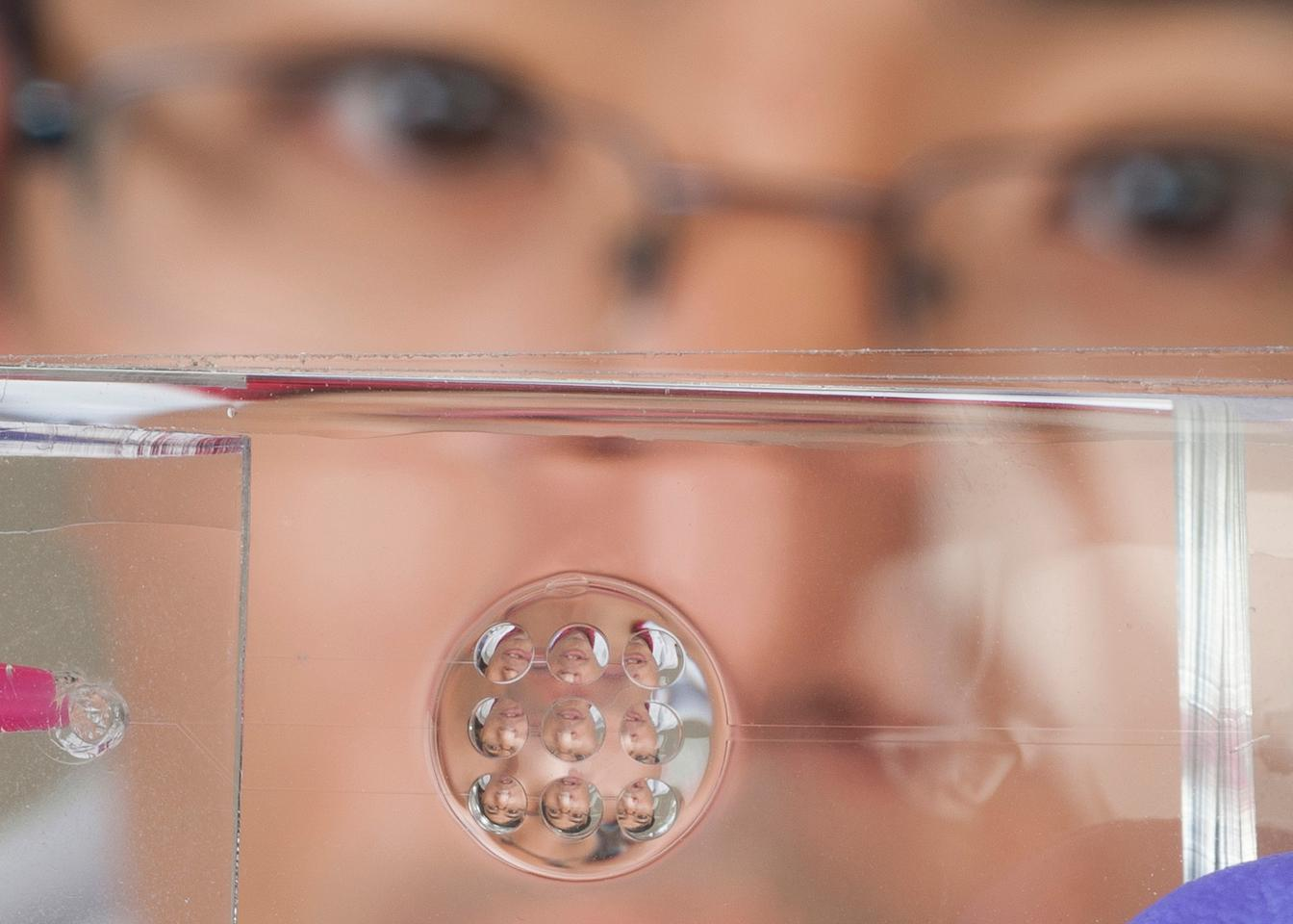 Yi Zhao shows off the bug/human hybrid lens prototype (Photo: Jo McCulty, Ohio State University)
