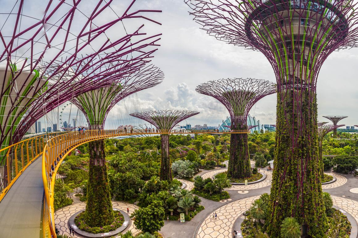 The view of Supertree Grove from the skyway at Singapore's Gardens by the Bay (Photo: Loz Blain)