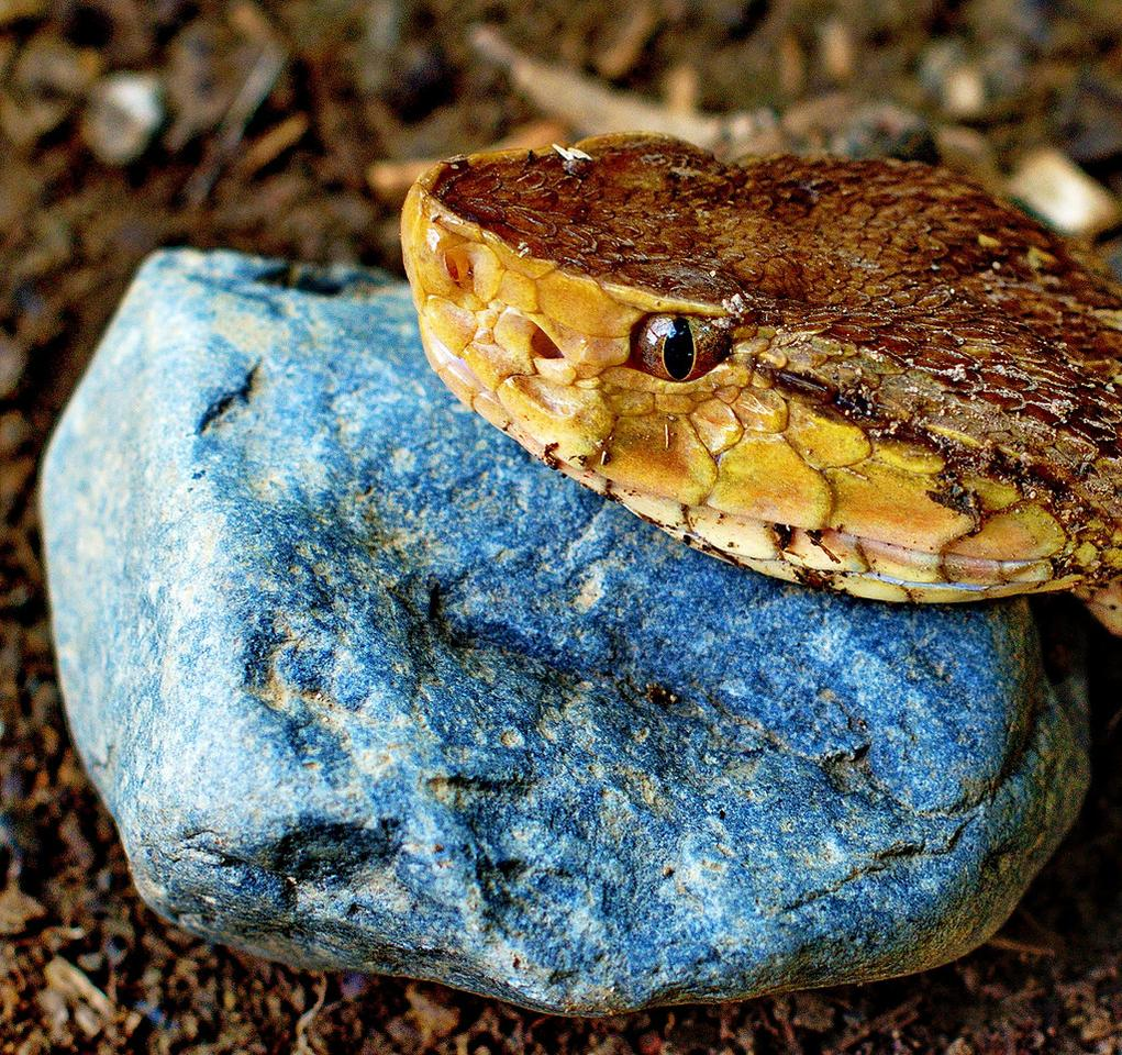 A molecule in the venom of a Bothrops asper pit viper has been found to stimulate enzymes that degrade plaques in the brain of Alzheimer's sufferers