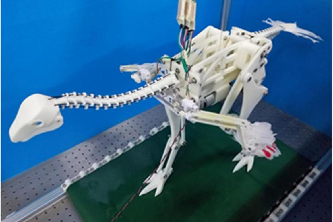 A robotic Caudipteryx demonstrates how a running motion may have caused the proto-wings to flap, eventually leading to the evolution of active flight