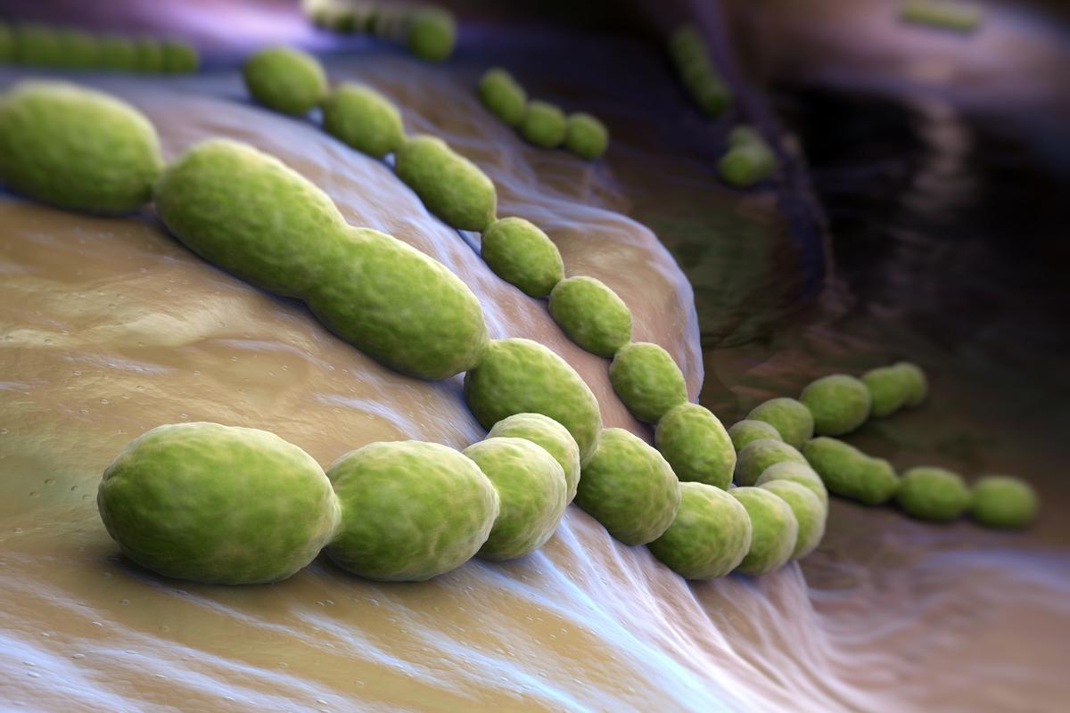 "Researchers at the University of Bristol have found that bacteria in the Streptococcus family use a ""molecular lasso"" to grab hold of host cells, in what they call a catch-clamp mechanism"