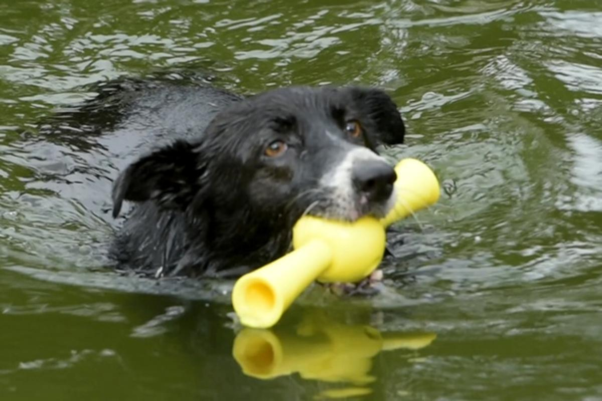 Paww's fetch toys float, allowing water play with dogs