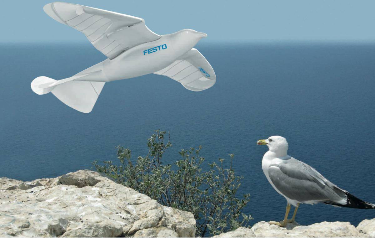 Festo's SmartBird robotic seagull and its herring gull inspiration
