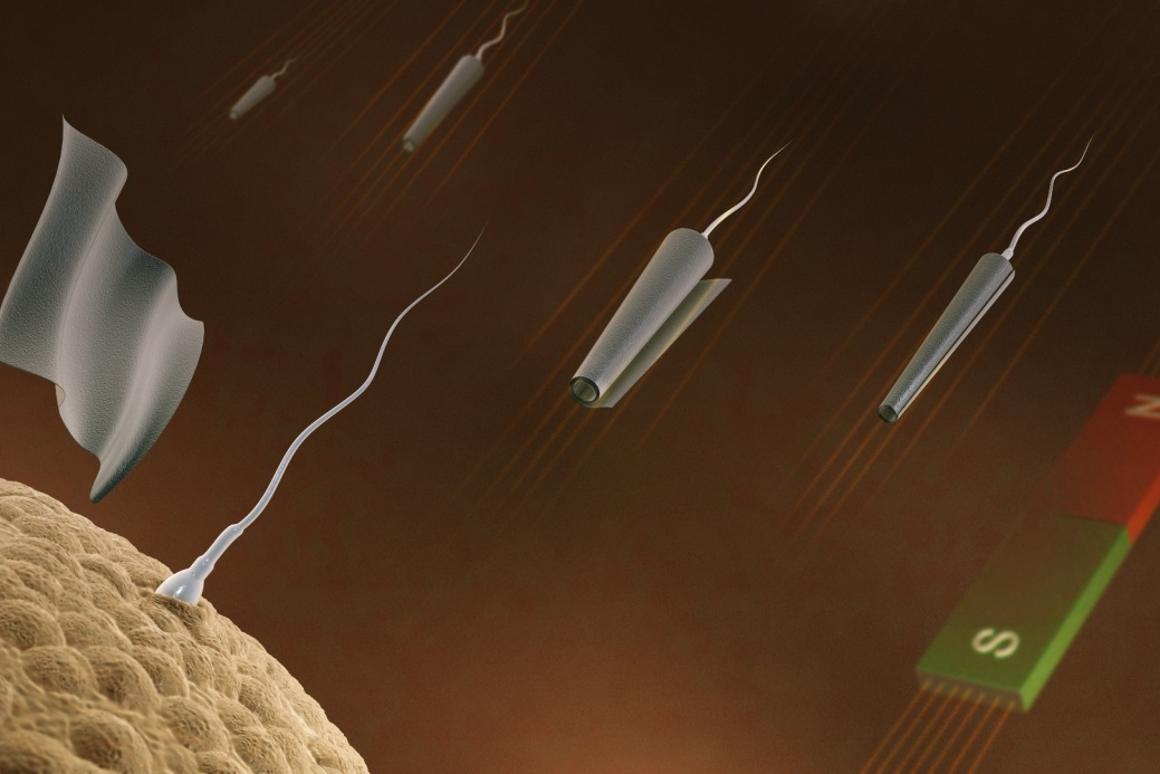 Spermbots created at IFW Dresden approach an egg, and the microtube falls away (Image: IFW Dresden, Germany)