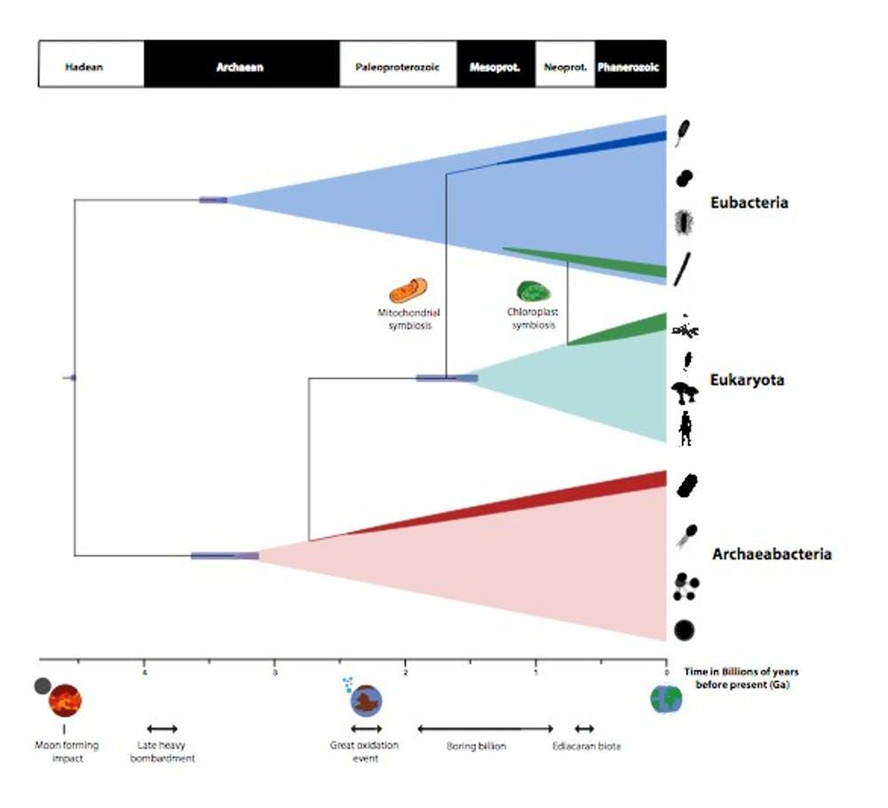The timeline created by the new study