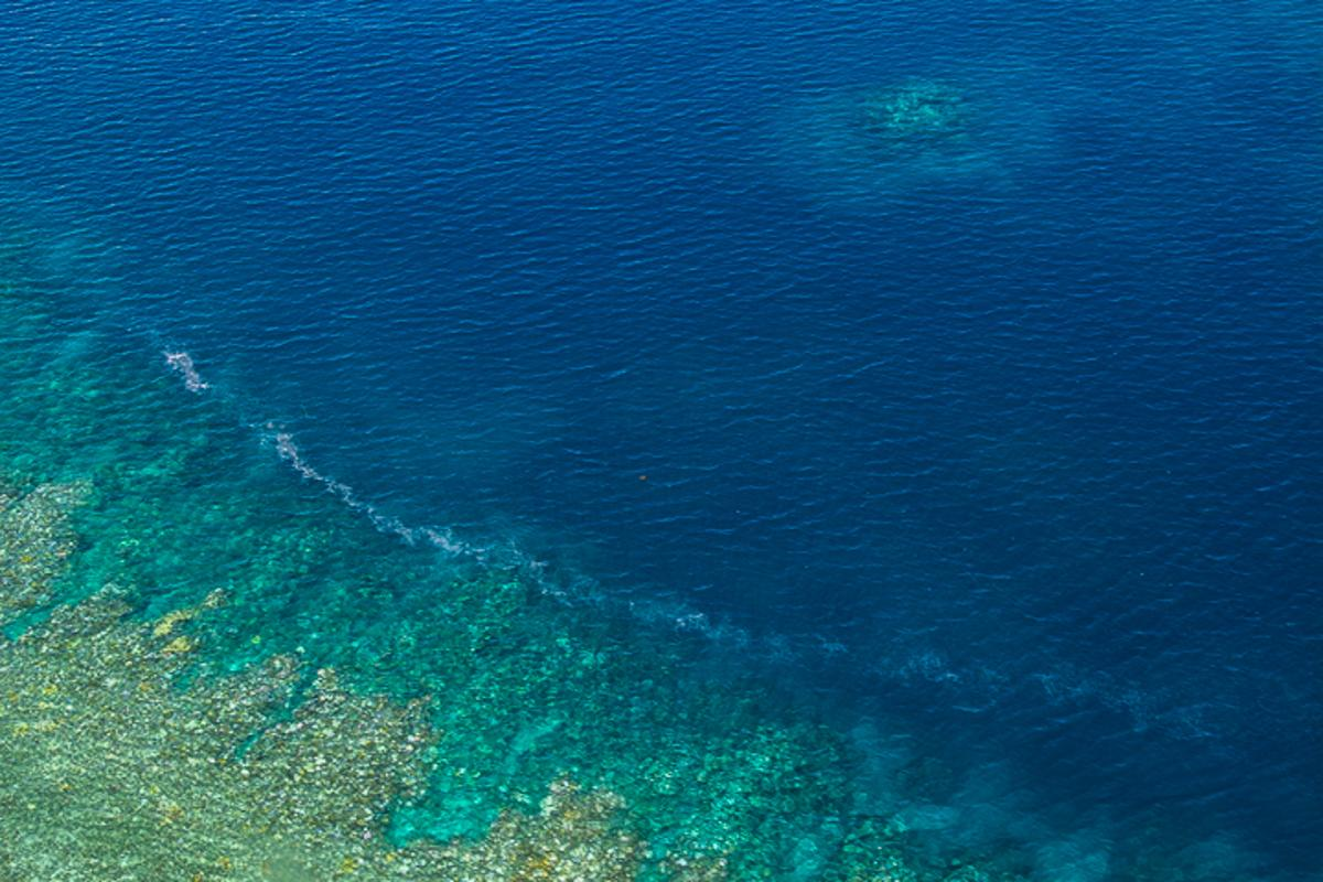 A recently completed aerial survey of the Great Barrier Reef has confirmed that a coral bleaching event is taking place for the second consecutive year