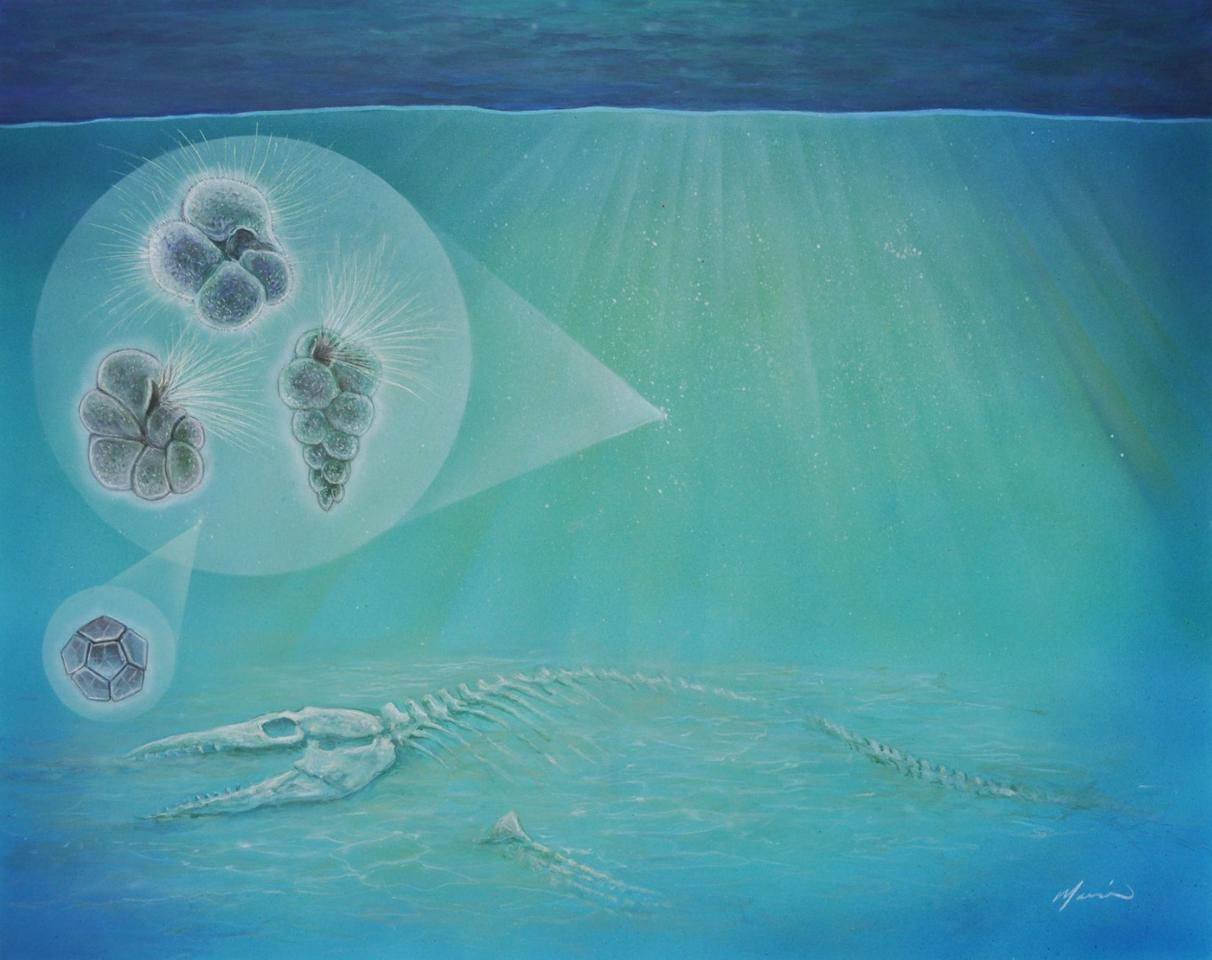 Artist's impression of the sea floor following the impact of the dinosaur killing asteroid