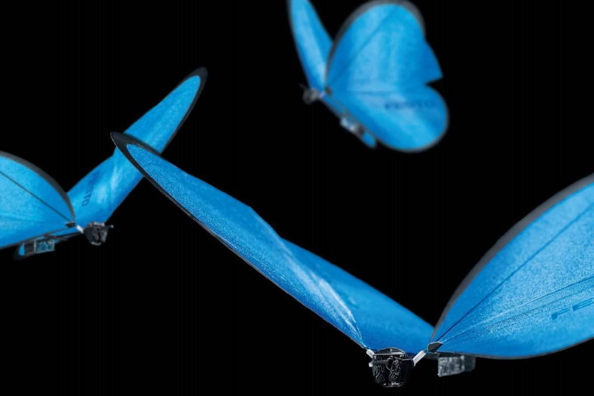 Festo's eMotionButterflies are reported capable of collective behavior and are able to autonomously avoid crashing into each other in real-time