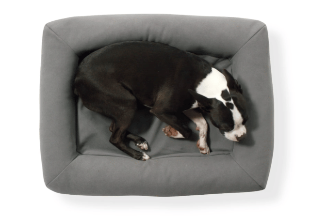 The bed has raised edges to make puppies feel sheltered
