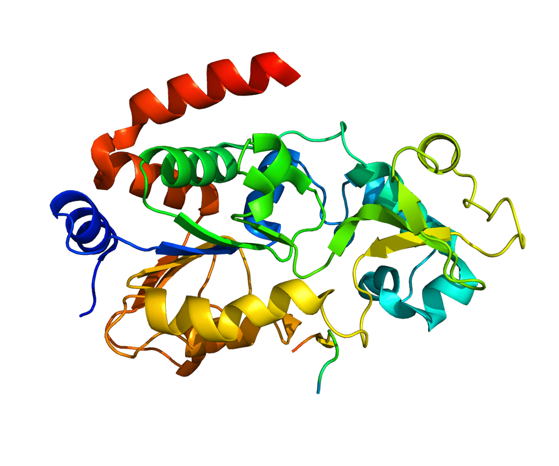 The SIRT3 protein molecule that appears to play a central role in regulating aging and longevity