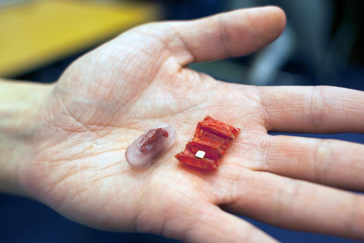 The accordion-style origami robot folds up to fit inside an ice capsule that is small enough to swallow