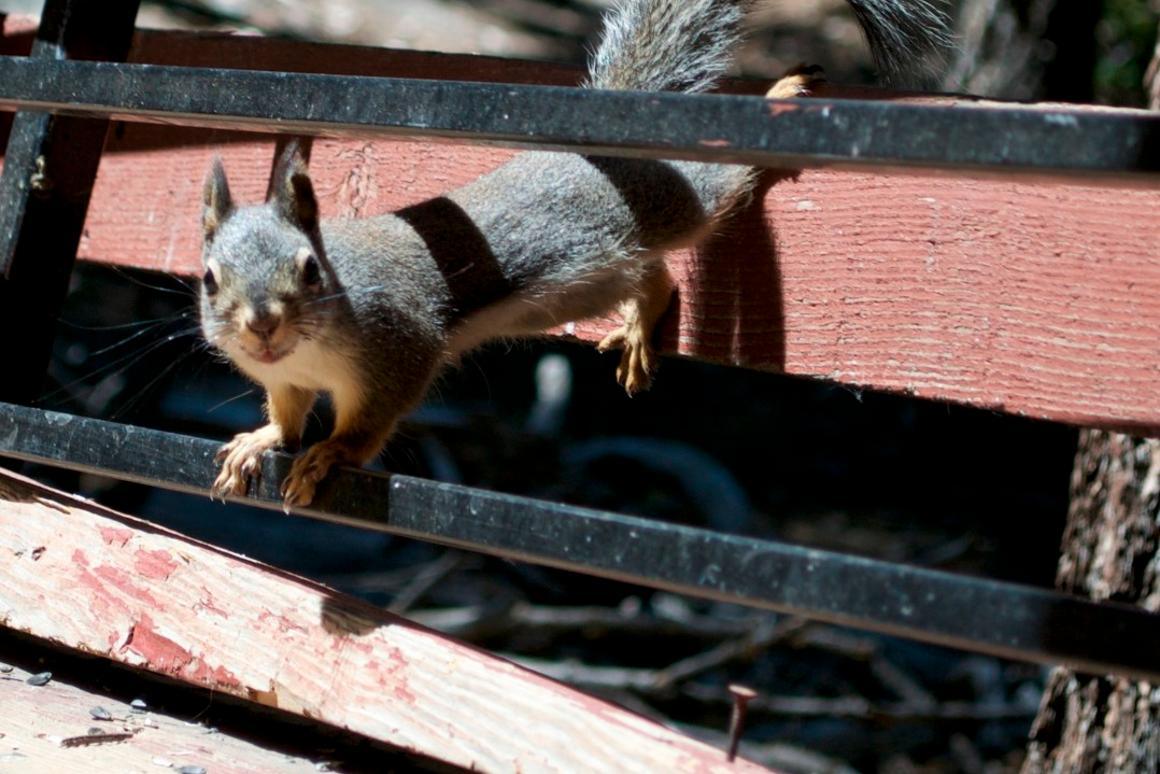 Not as cute as they look, squirrels needing to chew can wreak havoc on a crime scene